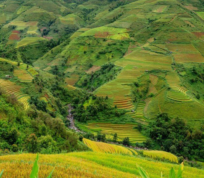 Stephen Acabado on the Ifugao Rice Terraces